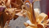 Disfruta de este tan importante provozaserka de losalahaneske devemos utilizar en esta época delKatún 13,pada kuidarnos y protegernos de lastormentas solaresy demás factores que puedan afectarnos, en su segunda prosel. […]